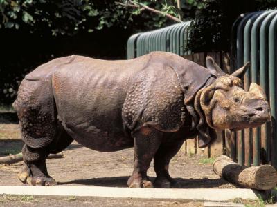 インド犀(インドさい)の意味 - goo国語辞書
